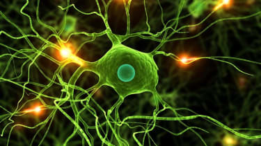 Cells grown in artificial tissue could help shape treatment for traumatic brain injuries