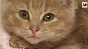 Meet Elsa, the adorable kitten rescuers found close to frozen