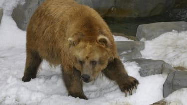 Woman plays dead to survive vicious bear attack