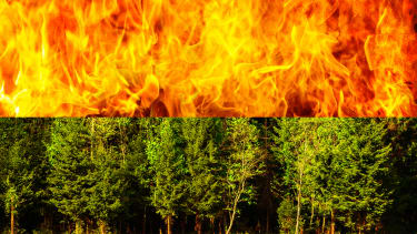 A forest and flames.