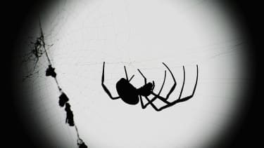 Spiders can easily eat us all.