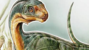 7-year-old boy discovers new species of dinosaur