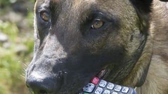 British dog calls police