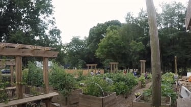 The free food forest.
