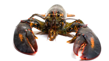The dispute boiled down to a question, do lobsters crawl or swim?