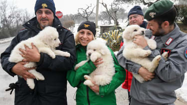 Puppies found after an avalanche.