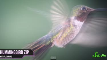 Hummingbirds are freaks of nature