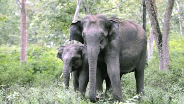 New research shows elephants are even smarter than we thought