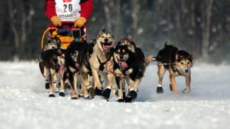 Iditarod musher Dallas Seavey