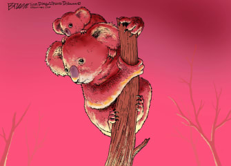 Editorial Cartoon World Australia wildfires koalas
