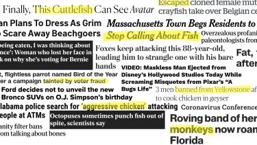 Absurd headlines.