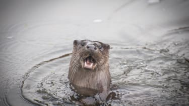 Otterly terrifying.
