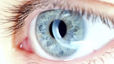 Harvard researchers regrow human corneas