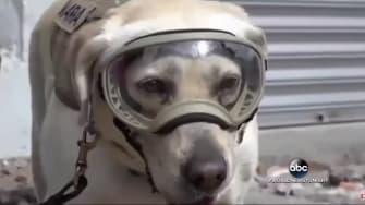 Hero dog.