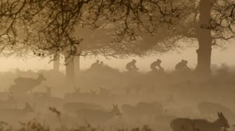 Cyclists and deer.