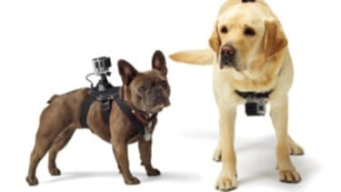 A GoPro camera for your dog