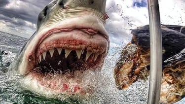 New Jersey teacher captures incredible, terrifying photo of great white shark