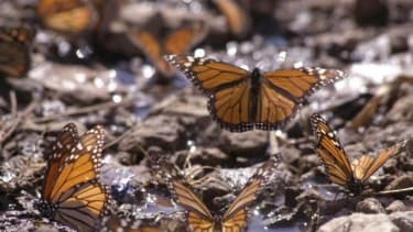 The new security technology inspired by a butterfly