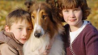 Study: Dog movies make certain breeds more popular