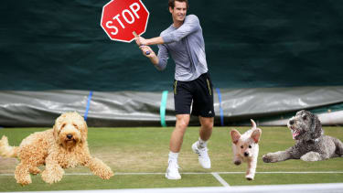 Andy Murray was late for Wimbledon practice because he stopped to rescue a dog