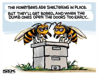 Editorial Cartoon U.S. murder hornets bees coronavirus quarantine