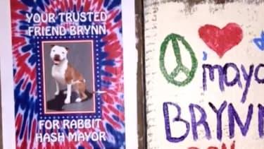 Brynn, the mayor of Rabbit Hash, Kentucky.