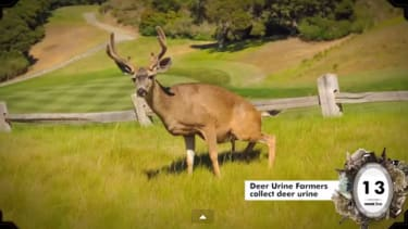'Deer urine farmers' are a real thing, and 25 other strange occupations