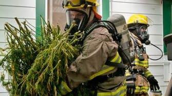 Firemen save marijuana crop from burning home