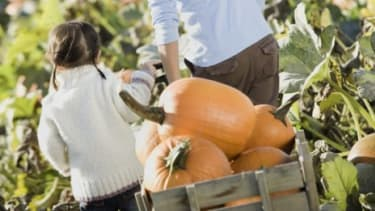 Better get those pumpkins while they're hot, East Coasters: Between Irene and a fungus outbreak the pumpkin crop is at a low point.