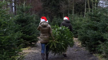 Getting Christmas trees in Germany.