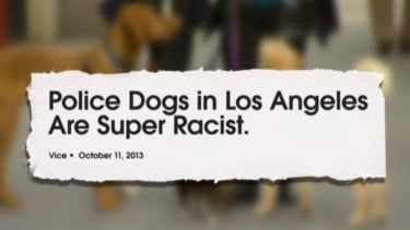 The Daily Show's Jessica Williams goes deep on racism in American dogs