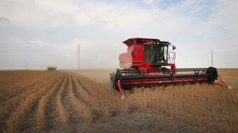 The soybean harvest in Worthington, Minnesota.