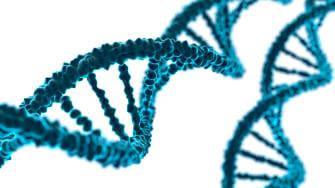 DNA rendering.