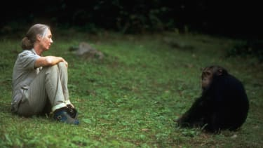 Jane Goodall continues to advocate for all species.