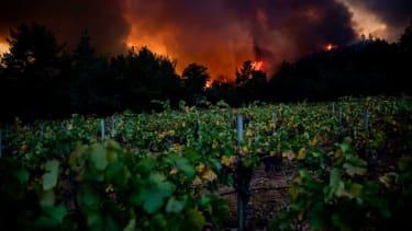 The Glass fire burns behind a vineyard.