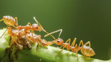 Study: Ants process information 'more efficiently than Google'