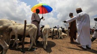 A livestock sale.