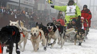 Jamaican dog sled
