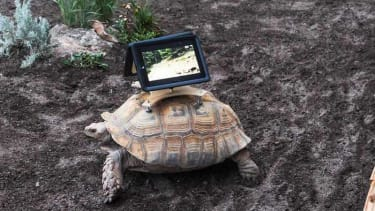 Critics say iPads mounted on tortoises for installation isn't art, it's abuse