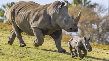 Rhino and babe.