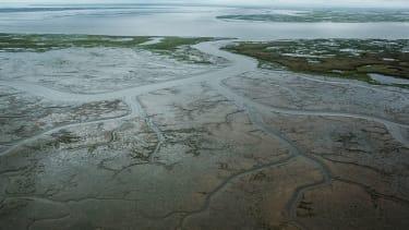 A marshy, tundra landscape in Alaska.