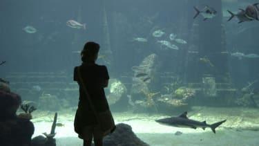 North Korea plans to open an underwater hotel
