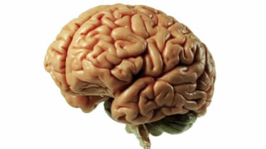 More than 100 jars of human brains are missing from the University of Texas
