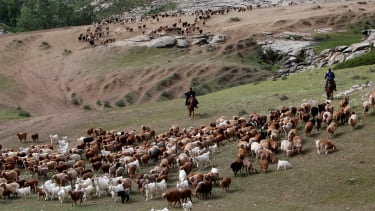 """Cattle herders in China's Xinjing provence, part of the country's """"new frontier."""""""