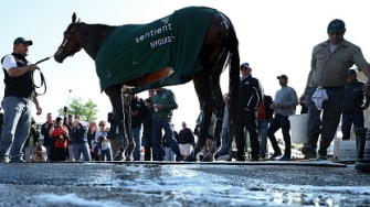 Nyquist before competing in the Preakness Stakes