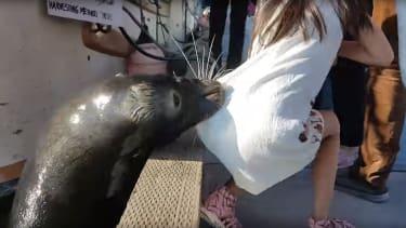 Sea Lion attack.