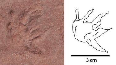 Paleontologists find dinosaur tracks in African diamond mine