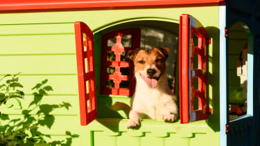 Happy dog in window of play house.