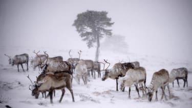 Russia mulls deploying 'reindeer police force' in Siberia