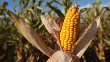 Ethanol from corn waste may be worse for the environment than gasoline